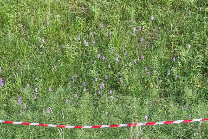 Orchideen Packer Bundesstrasse